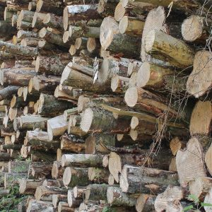 Stacked drying logs