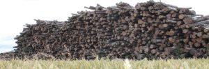 Morpeth Logs
